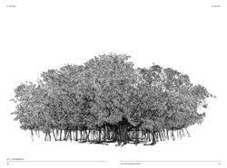 arbre dessin minutieux